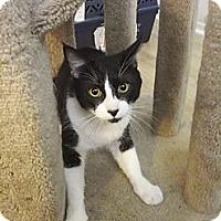 Adopt A Pet :: Tux - Laguna Woods, CA