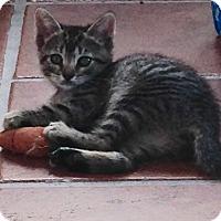 Adopt A Pet :: Hayden - Speonk, NY