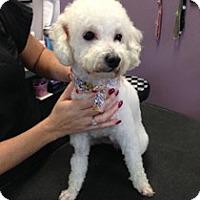 Adopt A Pet :: RYLEY - Melbourne, FL