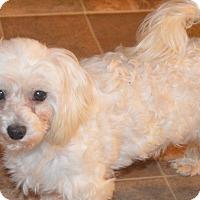 Adopt A Pet :: Jacque - Prole, IA