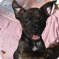 Adopt A Pet :: John Paul - Gainesville, FL