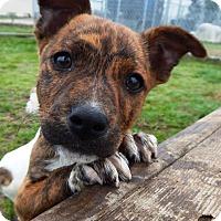 Adopt A Pet :: Mary Kate - Terrell, TX