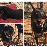 Doberman Pinscher/Shepherd (Unknown Type) Mix Dog for adoption in Midland, Texas - Captain America
