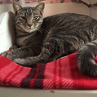 Adopt A Pet :: Hematite - Middletown, NY