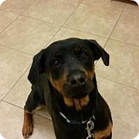 Adopt A Pet :: Quinn - Reisterstown, MD