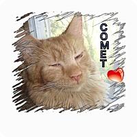 Adopt A Pet :: Comet - Harrisburg, NC