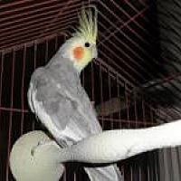 Adopt A Pet :: Jasper - Neenah, WI