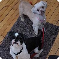 Adopt A Pet :: Ramona & Beazley - Chicago, IL