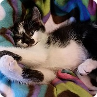 Adopt A Pet :: Jonah Hex - Tampa, FL