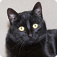 Adopt A Pet :: Sammi - Walnut, IA