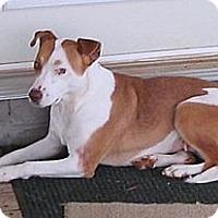 Adopt A Pet :: Eliza Peaches ($300) - Staunton, VA