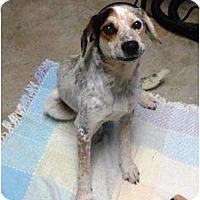 Adopt A Pet :: Bandit - Irvington, KY