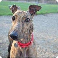 Adopt A Pet :: Roz (Eiffel Tower) - Chagrin Falls, OH