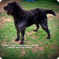Adopt A Pet :: Willow - Gadsden, AL
