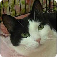 Adopt A Pet :: Cloey - Plainview, NY