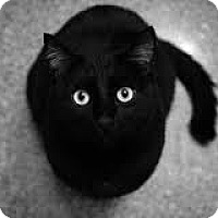 Adopt A Pet :: Black Magic - Lancaster, MA