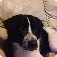 Adopt A Pet :: Rover - Largo, FL