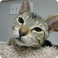 Adopt A Pet :: FRANCISCO aka CISCO - Brea, CA