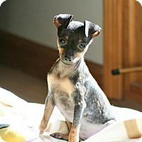 Adopt A Pet :: Mini Max - Malaga, NJ