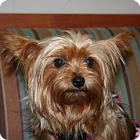 Adopt A Pet :: Gracie - Statewide and National, TX
