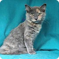 Adopt A Pet :: Edna - Arlington, VA