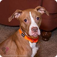 Adopt A Pet :: Kiki - Grand Rapids, MI