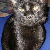 Adopt A Pet :: Nola - Asheboro, NC
