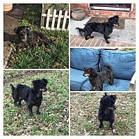 Adopt A Pet :: Carly - Greenville, SC