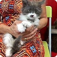 Adopt A Pet :: Serena - Woodland Hills, CA