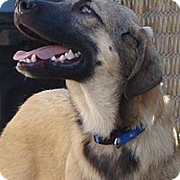Adopt A Pet :: Shiloh  *Adopted - Oklahoma City, OK