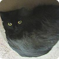Adopt A Pet :: Nochi - Mobile, AL