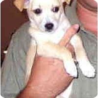 Adopt A Pet :: TOBY - Pembroke Pines, FL