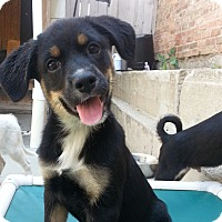 Adopt A Pet :: Jessie*ADOPTED!* - Chicago, IL