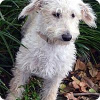 Adopt A Pet :: Hudson-Adoption pending - Bridgeton, MO