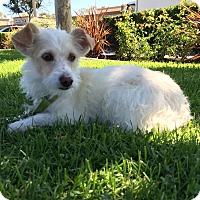 Adopt A Pet :: Sage - Mission Viejo, CA
