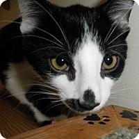 Adopt A Pet :: Anchor - Milwaukee, WI