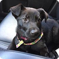 Adopt A Pet :: Roo - Pitt Meadows, BC