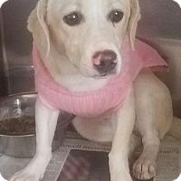Adopt A Pet :: Delilah - Canoga Park, CA