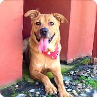 Adopt A Pet :: *URGENT*Chester - Van Nuys, CA