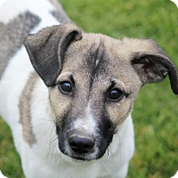 Adopt A Pet :: Bruno - Liberty Center, OH