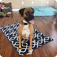 Adopt A Pet :: Rey - Springfield, MO