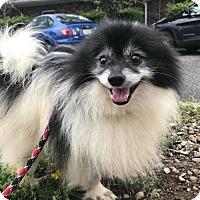 Adopt A Pet :: Louis Vuitton - Matawan, NJ