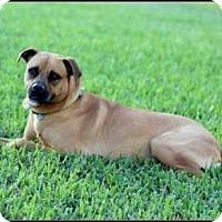 Adopt A Pet :: Betty - Homestead, FL