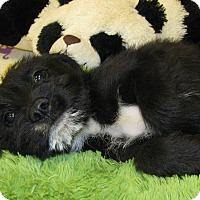 Adopt A Pet :: Hobbs - Groton, MA