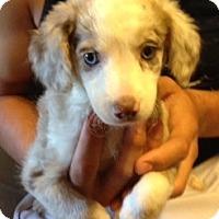 Adopt A Pet :: Elle - Modesto, CA