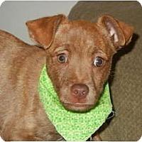 Adopt A Pet :: Tubby - Glastonbury, CT