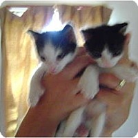 Adopt A Pet :: Litter Ready 8/1/2011 - Westfield, MA