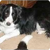 Adopt A Pet :: Maggie-Adopted - Tiffin, OH