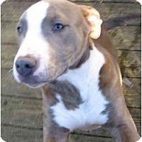 Adopt A Pet :: Neo - Seattle, WA