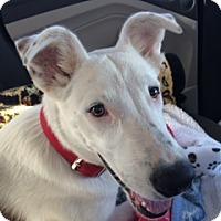 Adopt A Pet :: Dex - Scottsdale, AZ
